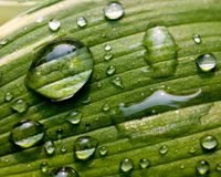 вода листьев капек зеленая Стоковая Фотография RF