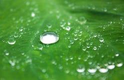 вода листьев капек Стоковая Фотография
