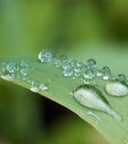 вода листьев капек Стоковая Фотография RF