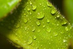 вода листьев падений бархатистая Стоковые Изображения