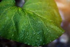 вода листьев падений зеленая В древесинах Стоковое Изображение RF