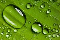вода листьев падений зеленая Стоковые Изображения