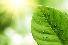 вода листьев падений зеленая Стоковое Изображение