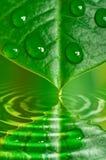 вода листьев падений Стоковая Фотография RF