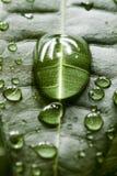 вода листьев падений стоковые фото