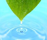 вода листьев падений Стоковое Изображение