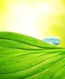 вода листьев падения зеленая Стоковое Изображение RF
