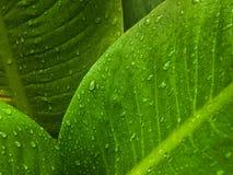 вода листьев падения зеленая Стоковые Фото