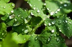 вода листьев падения предпосылки Стоковое Фото