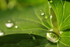 вода листьев падения Стоковые Изображения
