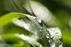 вода листьев падения Стоковое Изображение