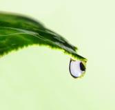 вода листьев падения Стоковые Изображения RF