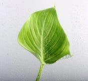 вода листьев пузырей Стоковое Изображение RF