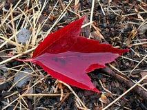 вода листьев чашки Стоковая Фотография RF