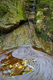 вода листьев Стоковая Фотография
