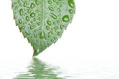 вода листьев Стоковое фото RF
