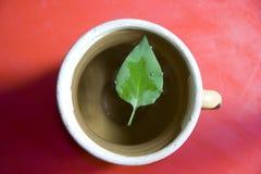 вода листьев Стоковые Изображения