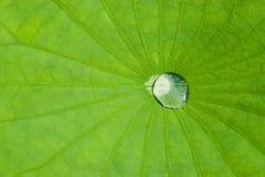 вода лотоса листьев падения Стоковое фото RF