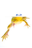 вода лягушки Стоковые Изображения RF