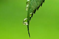 вода макроса капельки Стоковая Фотография RF