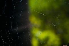 Вода на паутине Стоковое Изображение