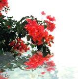 вода отражения ветви Стоковое Изображение RF
