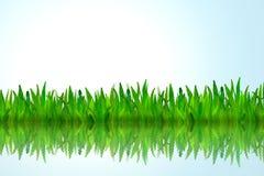 вода отражения зеленого цвета травы Стоковое фото RF