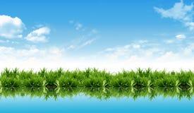вода отражения свежей травы новая Стоковые Фото