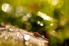 Вода падает как роса утра на лист с фокусом на переднем плане Стоковые Изображения RF