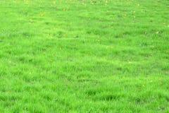 Вода падает свежее утро травы Стоковое Изображение RF