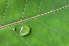Вода падения на зеленых лист Стоковая Фотография RF