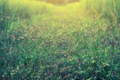 Вода падения на траве Стоковая Фотография