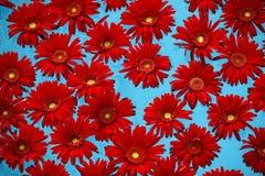 вода положения цветков стоковая фотография