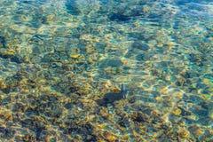 Вода предпосылки прозрачная Красного Моря и красивые рыбы в чистой воде для нырять стоковое изображение rf