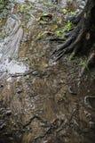 Вода пропускает в земле Стоковая Фотография RF