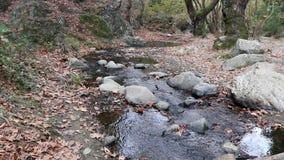 вода пропуская в реке Поток через утесы и листья в лесе, концепции осени сток-видео