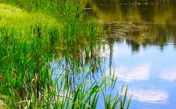 вода пруда заводов Стоковые Фото