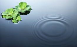 вода пульсаций заводов Стоковое фото RF