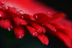 вода пуль Стоковые Изображения RF