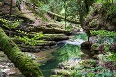 вода пущи естественная Стоковое фото RF