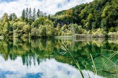 Вода сизоватый зеленый цвет и имеет красивое отражение деревьев стоковая фотография rf