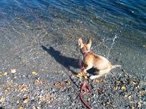 вода собаки стоковое изображение