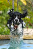 вода собаки стоковое фото rf