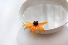 вода спы цветка Стоковое фото RF