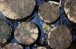 вода ствола дерева Стоковые Изображения