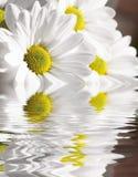 вода стоцвета Стоковое Изображение RF