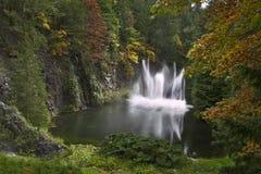 вода танцульки Стоковое Изображение RF