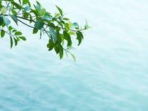 вода текстуры Стоковое Фото
