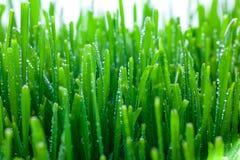 вода травы падений Стоковые Фото