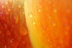 вода тюльпанов стоковое изображение rf